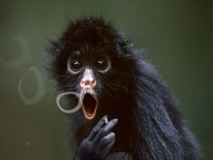 mono-fumando